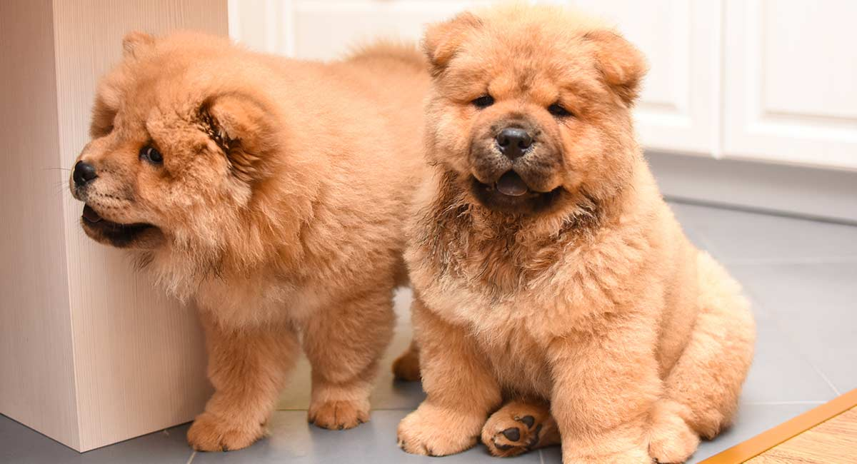 Amazing Dog Names
