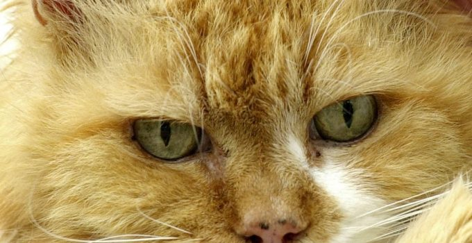 Cute Ginger Cat Names Boy Archives Theq Post List