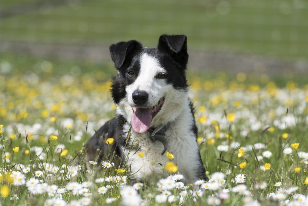 Names for Your Black and White Dog