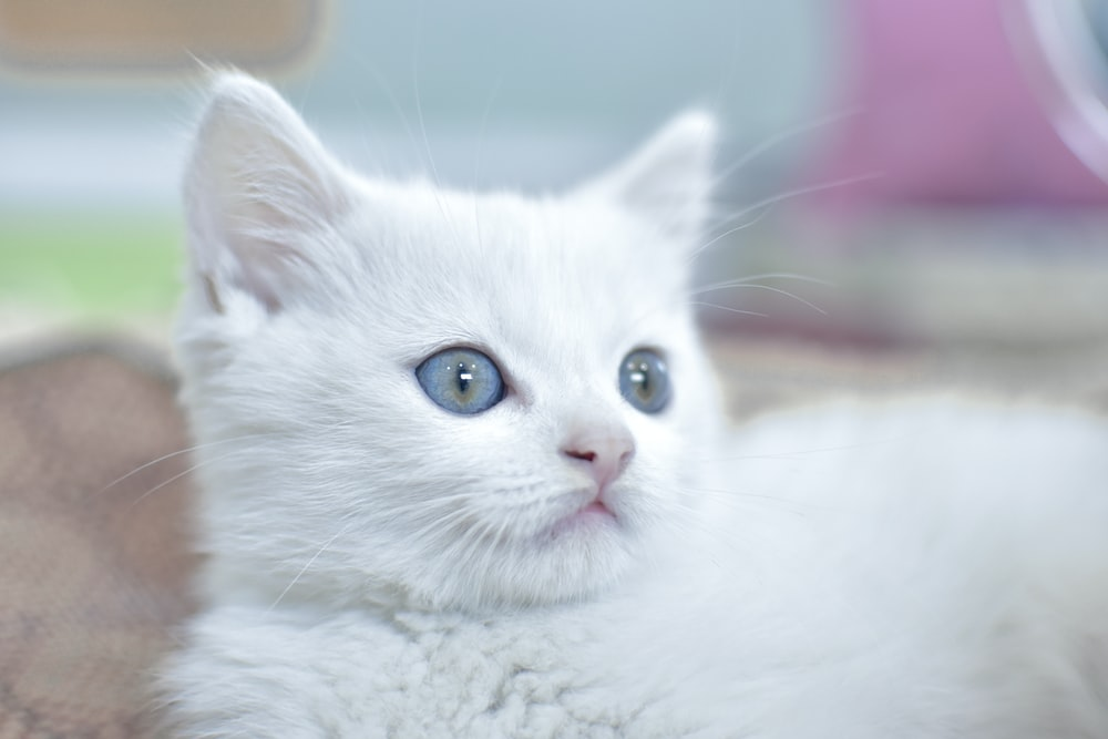 Names for White Cat