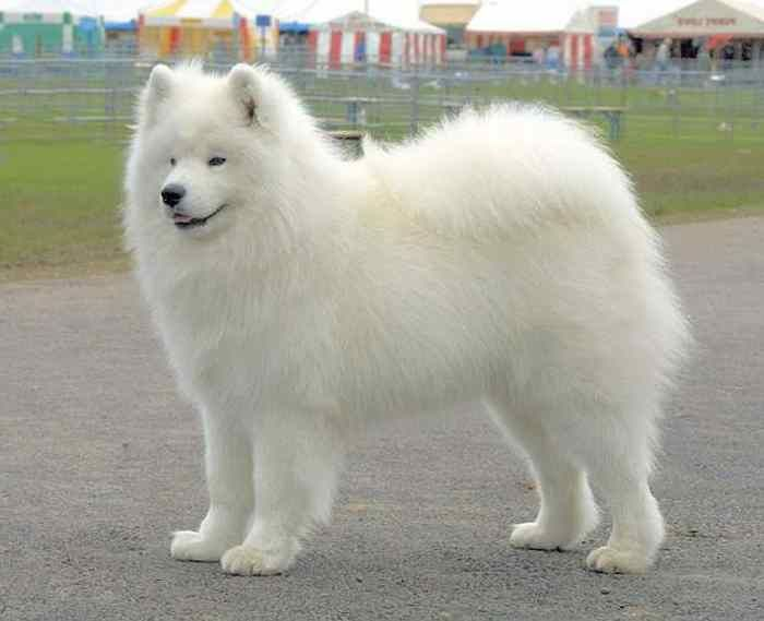 Names for White Dog